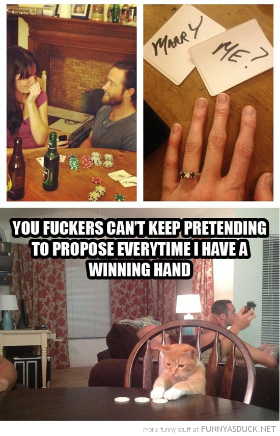 poker game marry me cat lolcat animal propose every time winning hand cards funny pics pictures pic picture image photo images photos lol
