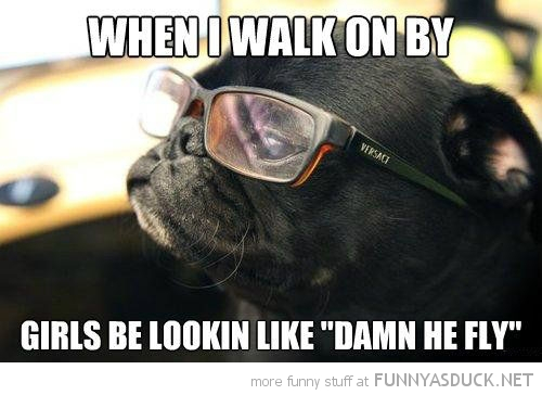 pug dog animal glasses walk on by girls damn he fly baby bird owl dangerous go alone take this zelda funny pics pictures pic picture image photo images photos lol