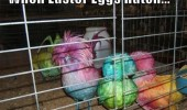 rainbow colored birds animals when easter eggs hatch funny pics pictures pic picture image photo images photos lol