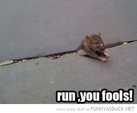rat stuck pavement sidewalk animal run you fools gandalf lord rings funny pics pictures pic picture image photo images photos lol