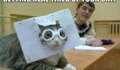 real tired of your shit cat lolcat animal paper glasses funny pics pictures pic picture image photo images photos lol