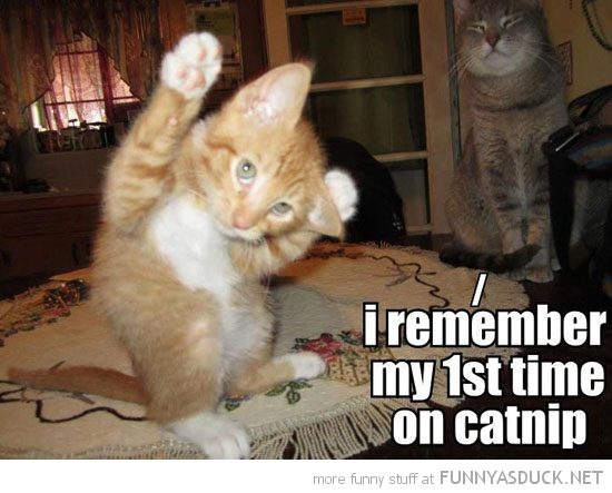 cat kitten lolcat animal remember first time took catnip funny pics pictures pic picture image photo images photos lol