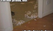 cat lolcat animal ripped toilet roll paper no proud done is done funny pics pictures pic picture image photo images photos lol