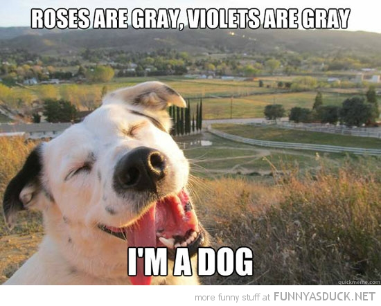 roses violets grey i'm a dog animal happy valentines day poem funny pics pictures pic picture image photo images photos lol