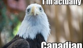 sad bald eagle bird animal I'm actually canadian funny pics pictures pic picture image photo images photos lol