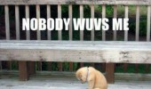 sad depressed dog animal puppy nobody loves me funny pics pictures pic picture image photo images photos lol