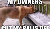 sad depressed dog owners cut my balls off funny pics pictures pic picture image photo images photos lol