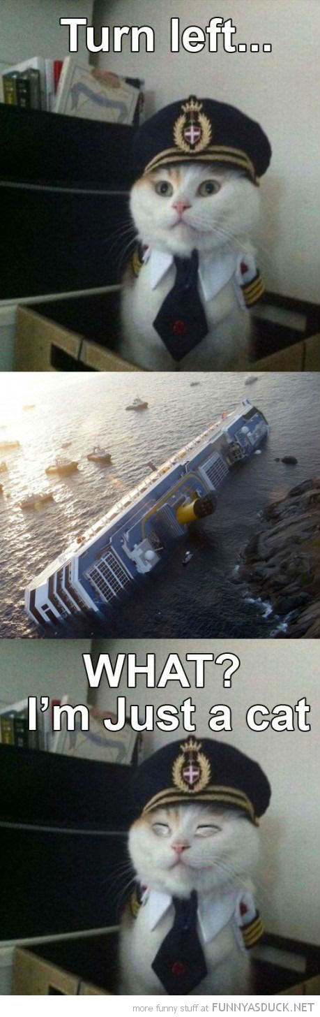 sailor captain cat lolcat animal sunken ship boat what funny pics pictures pic picture image photo images photos lol