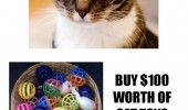 scum bag cat lolcat animal $100 worth toys dead leaf meme funny pics pictures pic picture image photo images photos lol