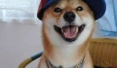 scumbag dog animal cap hat barking contest neighbors funny pics pictures pic picture image photo images photos lol
