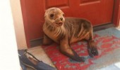 seal door step animal excuse me sir moment talk lord poseiden funny pics pictures pic picture image photo images photos lol
