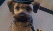 sherlock holmes dog animal top hat monocle pipe elementary my dear woofson funny pics pictures pic picture image photo images photos lol