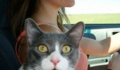 shocked cat lolcat animal woman car you're letting her drive funny pics pictures pic picture image photo images photos lol