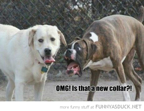 shocked surprised dog animal omg new collar funny pics pictures pic picture image photo images photos lol