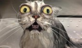 shocked scared cat lolcat animal awkward moment run out hot water funny pics pictures pic picture image photo images photos lol