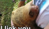 sloth animal hugging person i like you smiling happy funny pics pictures pic picture image photo images photos lol