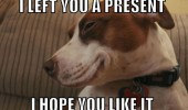smug dog animal left you present hope you like it funny pics pictures pic picture image photo images photos lol
