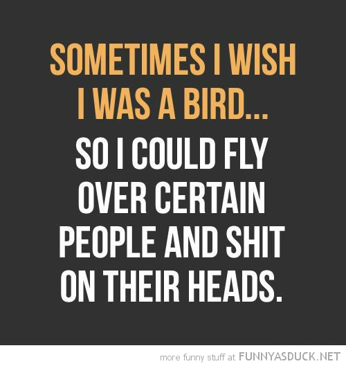 sometimes wish could be bird fly people shit on head baby bird owl dangerous go alone take this zelda funny pics pictures pic picture image photo images photos lol