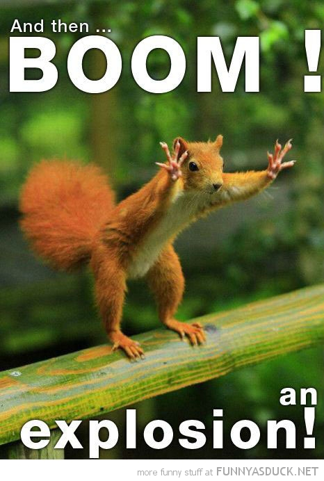 squirrel animal hands up boom explosion funny pics pictures pic picture image photo images photos lol