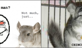 stoned guy meme sup man chinchillin chinchilla animal funny pics pictures pic picture image photo images photos lol