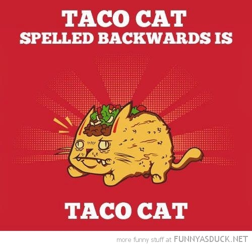 taco cat comic spelled backwards funny pics pictures pic picture image photo images photos lol