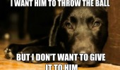 thoughtful dog animal want him trow ball don't want to give funny pics pictures pic picture image photo images photos lol