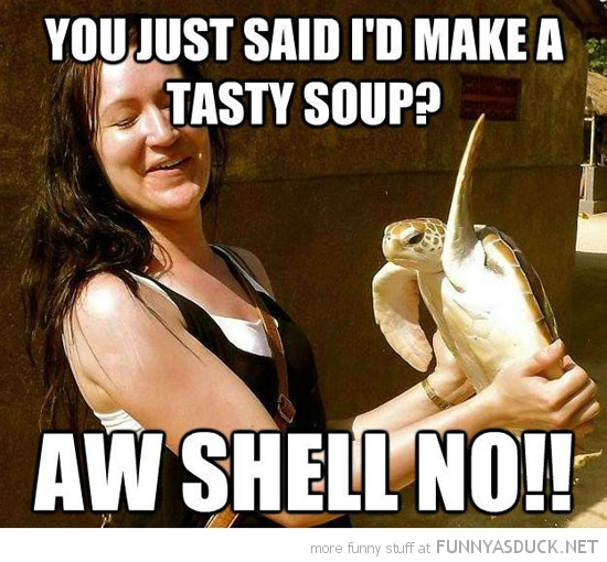 turtle animal flipper slap tasty soup oh shell no funny pics pictures pic picture image photo images photos lol