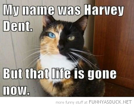 two faced cat lolcat animal harvey dent bat man life gone funny pics pictures pic picture image photo images photos lol