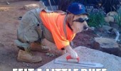 workman dog animal builder cement just smoothing out felt little ruff funny pics pictures pic picture image photo images photos lol