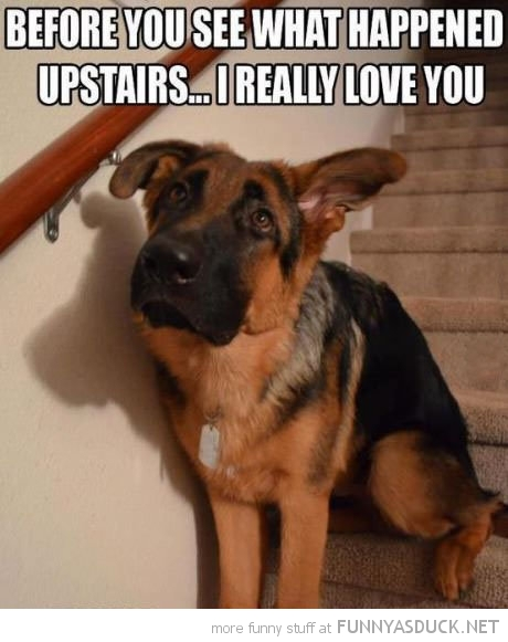 worried dog animal before go upstairs love you funny pics pictures pic picture image photo images photos lol