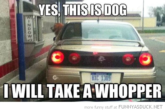 yes this is dog animal drive through burger i'll have a whopper funny pics pictures pic picture image photo images photos lol