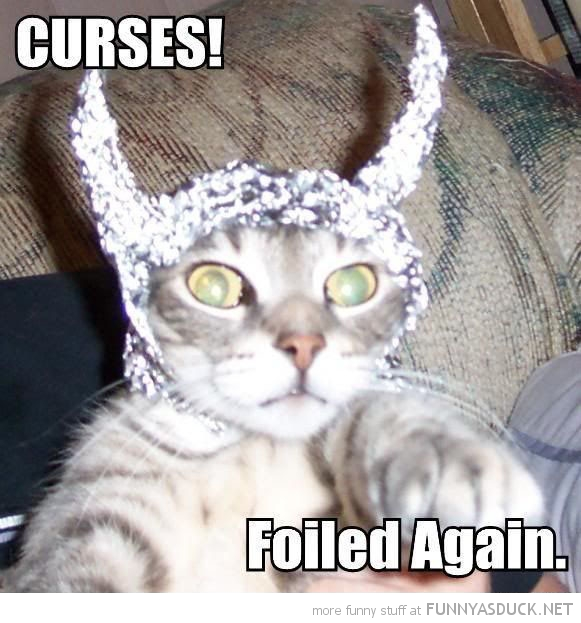 cat lolcat animal tin foil hat curses foiled again funny pics pictures pic picture image photo images photos lol