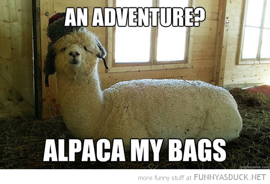 adventure alpaca my bags animal funny pics pictures pic picture image photo images photos lol