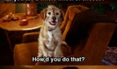 anchorman dog ron burgandy film movie scene baxter pooped refrigerator wheel cheese funny pics pictures pic picture image photo images photos lol