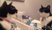 angry cat lolcat animal reflection mirror who think you are not supposed be on counter funny pics pictures pic picture image photo images photos lol