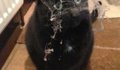 angry cat lolcat animal spider web face dammit lazy human clean house funny pics pictures pic picture image photo images photos lol