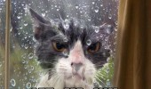 angry grumpy cat animal wet rain door let me in funny pics pictures pic picture image photo images photos lol