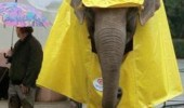 elephant raincoat animal mac argument invalid funny pics pictures pic picture image photo images photos lol