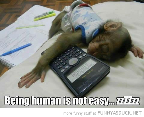 baby monkey animal sleeping home work calculator being human isn't easy funny pics pictures pic picture image photo images photos lol