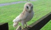 baby owl bird animal call him mini me dr evil austin powers funny pics pictures pic picture image photo images photos lol