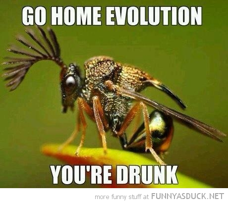 bee wasp insect mohawk animal hair go home evolution drunk funny pics pictures pic picture image photo images photos lol