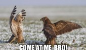 birds animals fighting come at me bro funny pics pictures pic picture image photo images photos lol