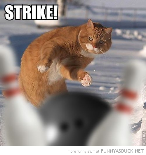 cat lolcat animal bowling strike funny pics pictures pic picture image photo images photos lol