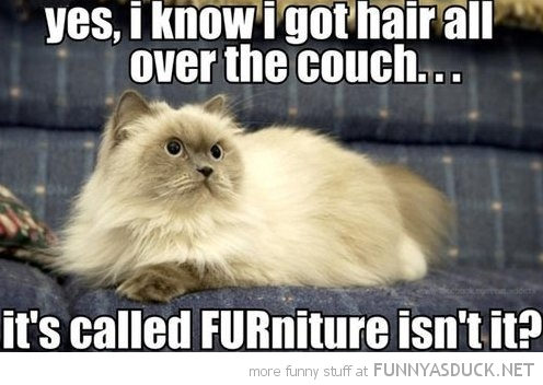 cat lolcat animal hair couch sofa furniture funny pics pictures pic picture image photo images photos lol