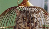 cat stuck bird cage lolcat animal son of bitch funny pics pictures pic picture image photo images photos lol