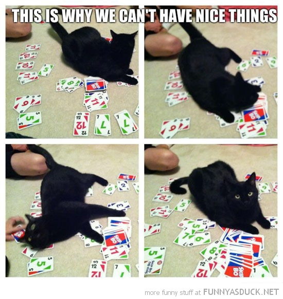cat lolcat animal rolling card game this is why can't have nice things funny pics pictures pic picture image photo images photos lol