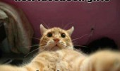 cat lolcat animal selfie how facebook girls funny pics pictures pic picture image photo images photos lol