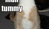 cat smiling lolcat animal my tummy has a happy funny pics pictures pic picture image photo images photos lol