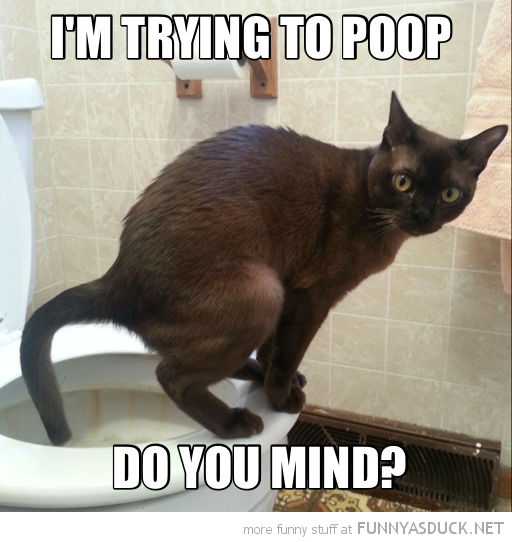 cat toilet animal lolcat do you mind trying to poop  funny pics pictures pic picture image photo images photos lol