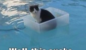 cat lolcat animal tub boad water well this sucks funny pics pictures pic picture image photo images photos lol